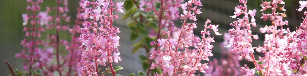 Welcome to Glenda Wilks Homeopathy Clinic Mount Glorious, Queensland